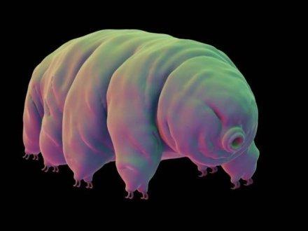 Mengenal Makhluk Paling Kuat di Muka Bumi